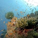 oceanacidreef