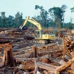 rainforestdestruction